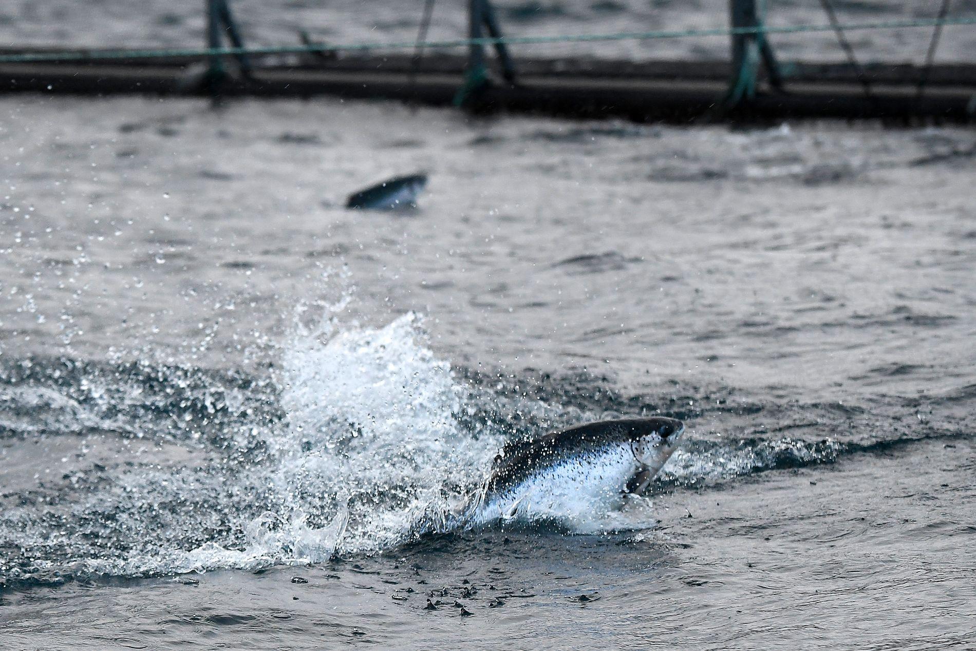ENGASJEMENT: Mange har demonstrert mot monstermaster i Hardanger, pelsdyroppdrett og gruvedrift i Førdefjorden. Hvor er det samme engasjement mot åpne oppdrettsanlegg i sjø, spør innsender.