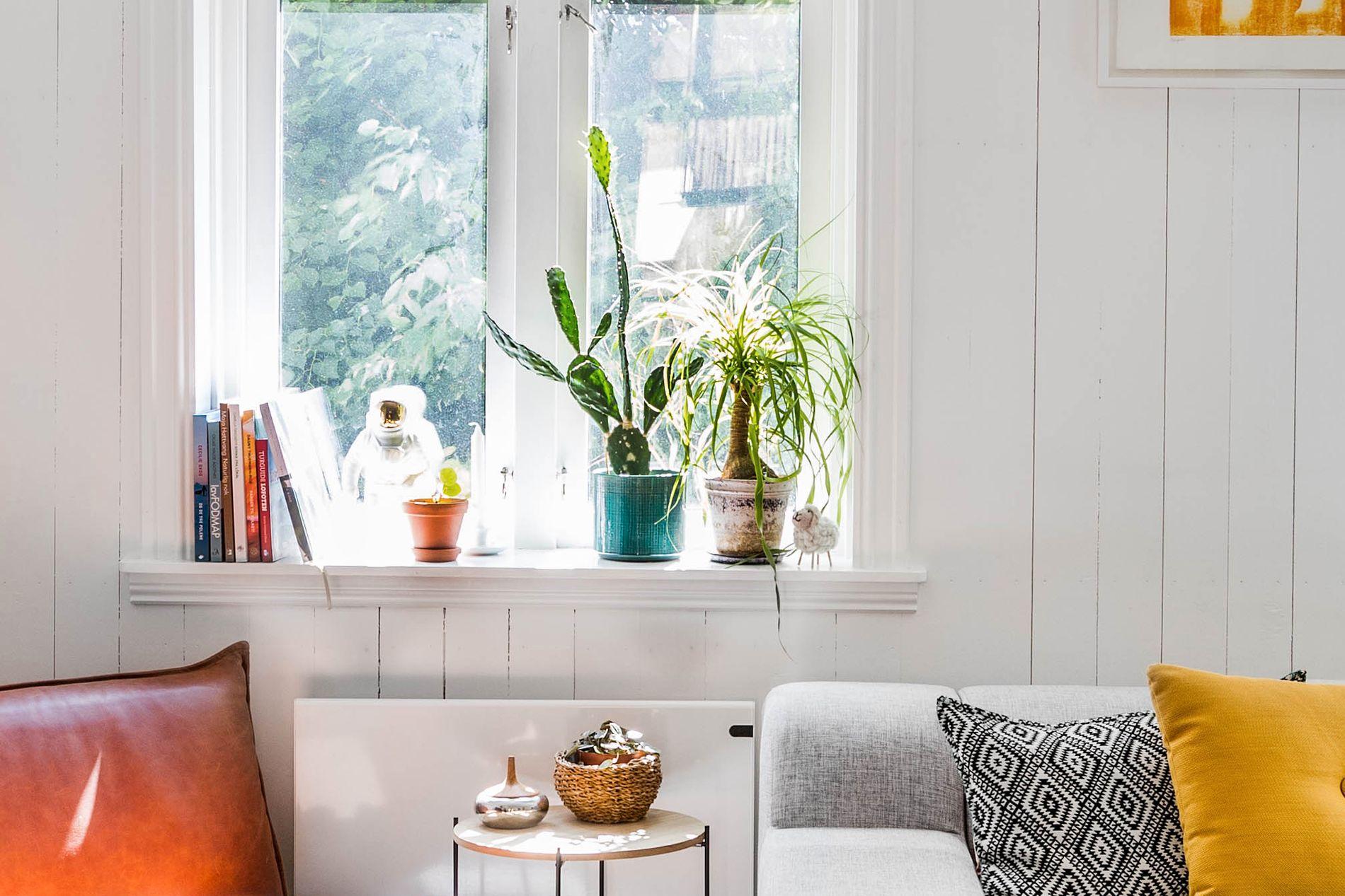 Kaktusen i vinduskarmen er avlegger av et tippoldebarn av svigermors kaktus fra 1970-tallet.