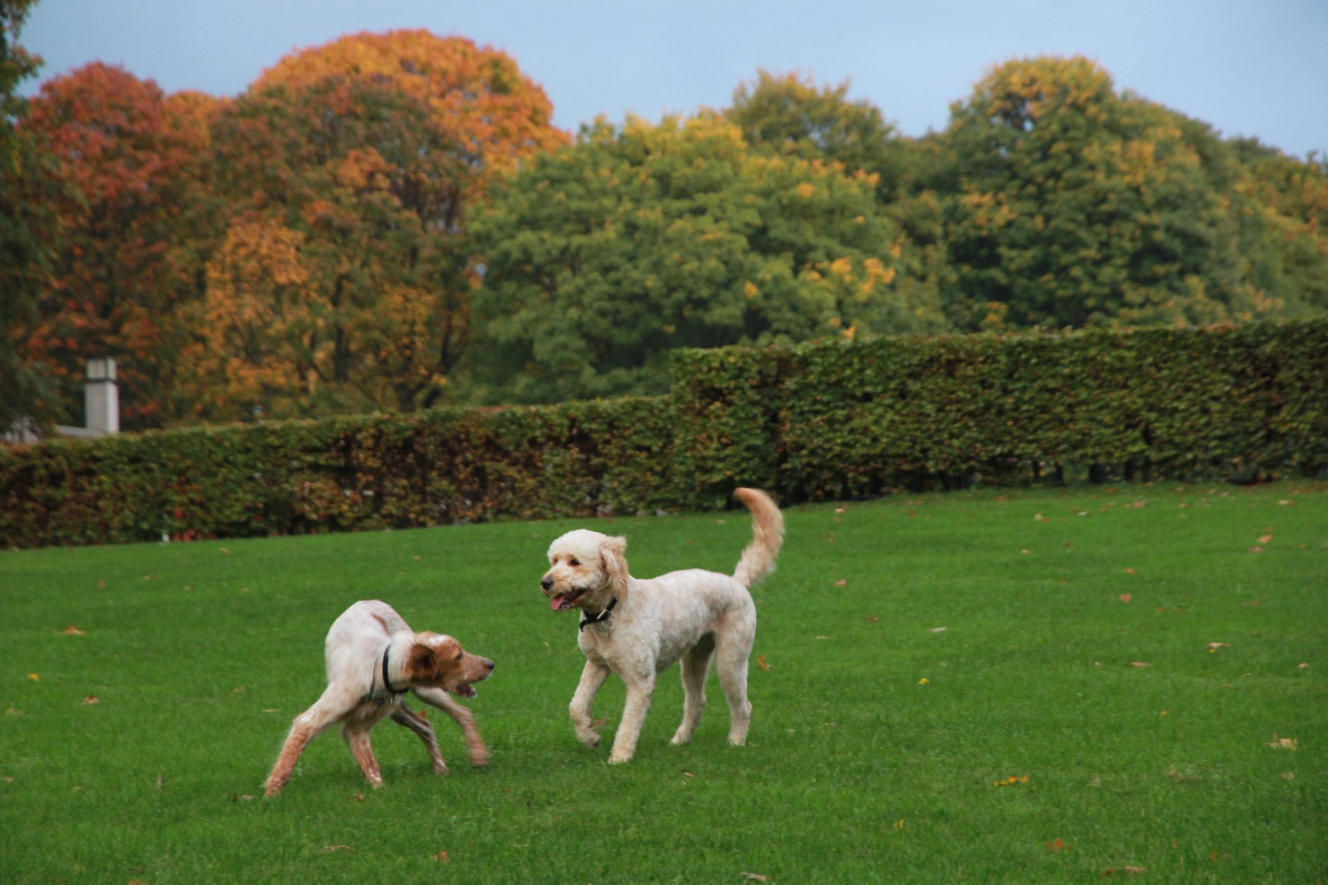 KONTROLL: Hundeloven er klar. Du skal ha kontroll på hunden din i offentlighet, skriver Thea Christine Økland.