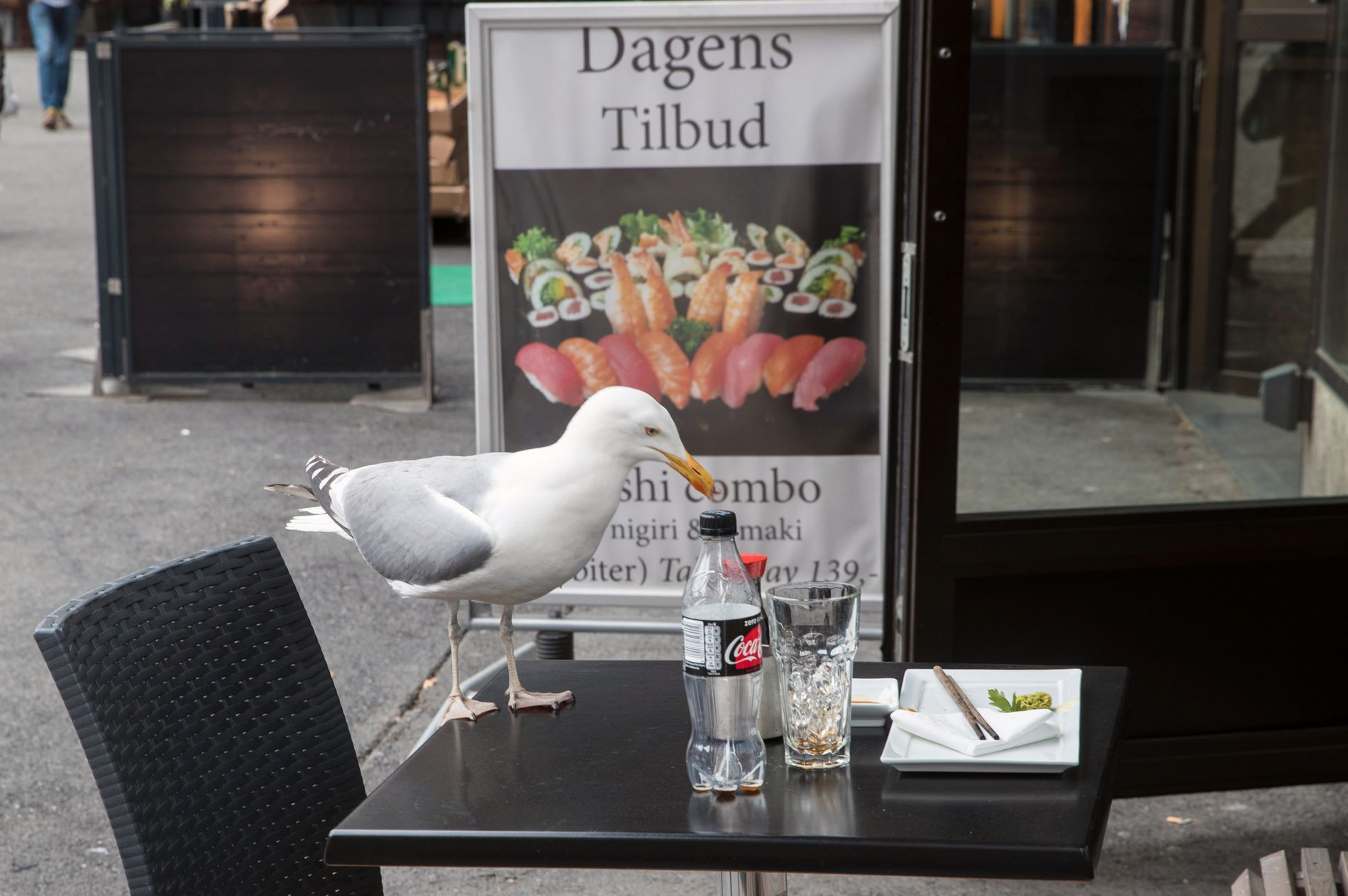 URBAN: En måke på Fridtjof Nansens plass i Oslo har smakt på Dagens tilbud og er fornøyd med det.