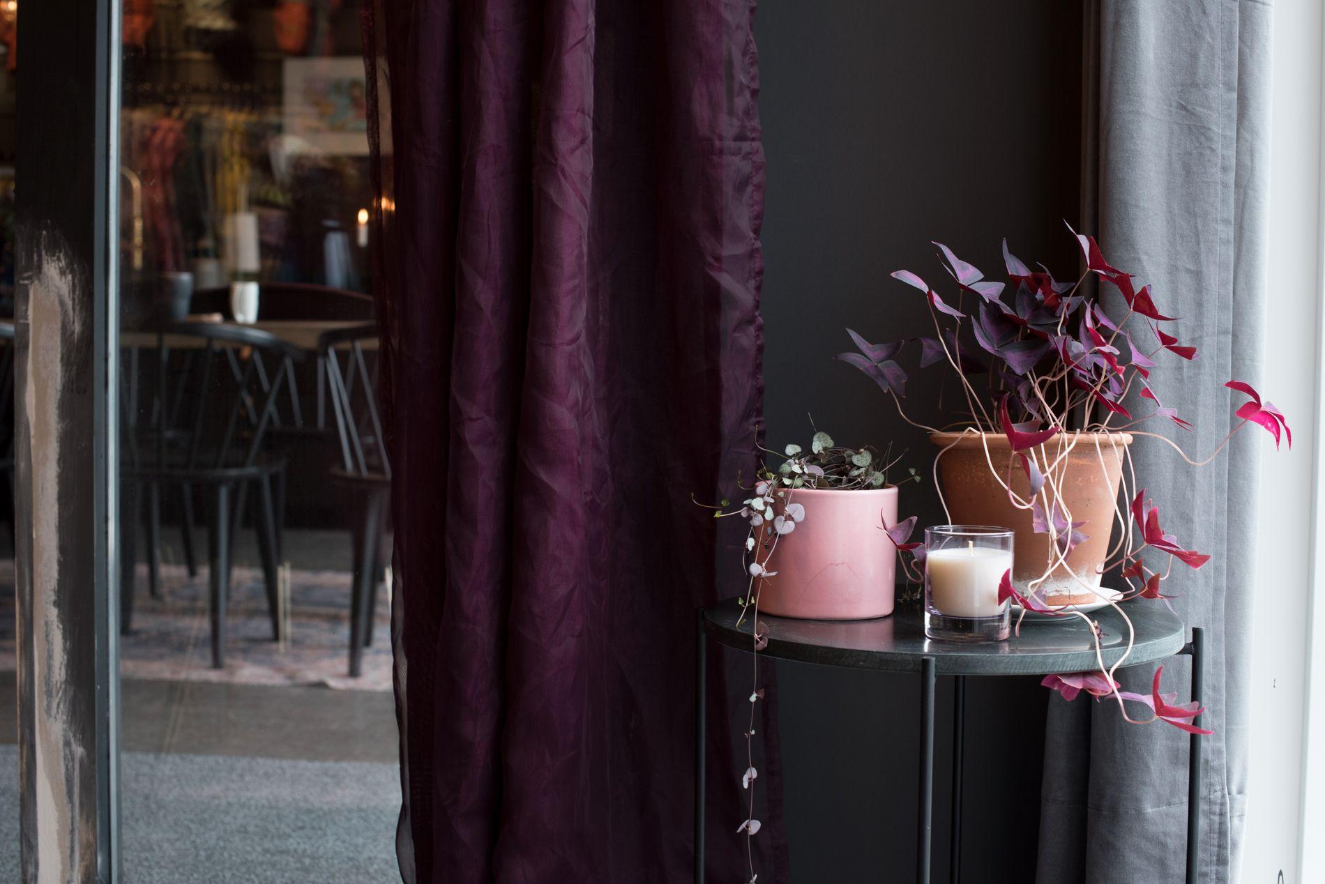 Pidestaller og blomsterpotter kommer fra brukthandelen, plantene er laget av stiklinger fra det de hadde hjemme.