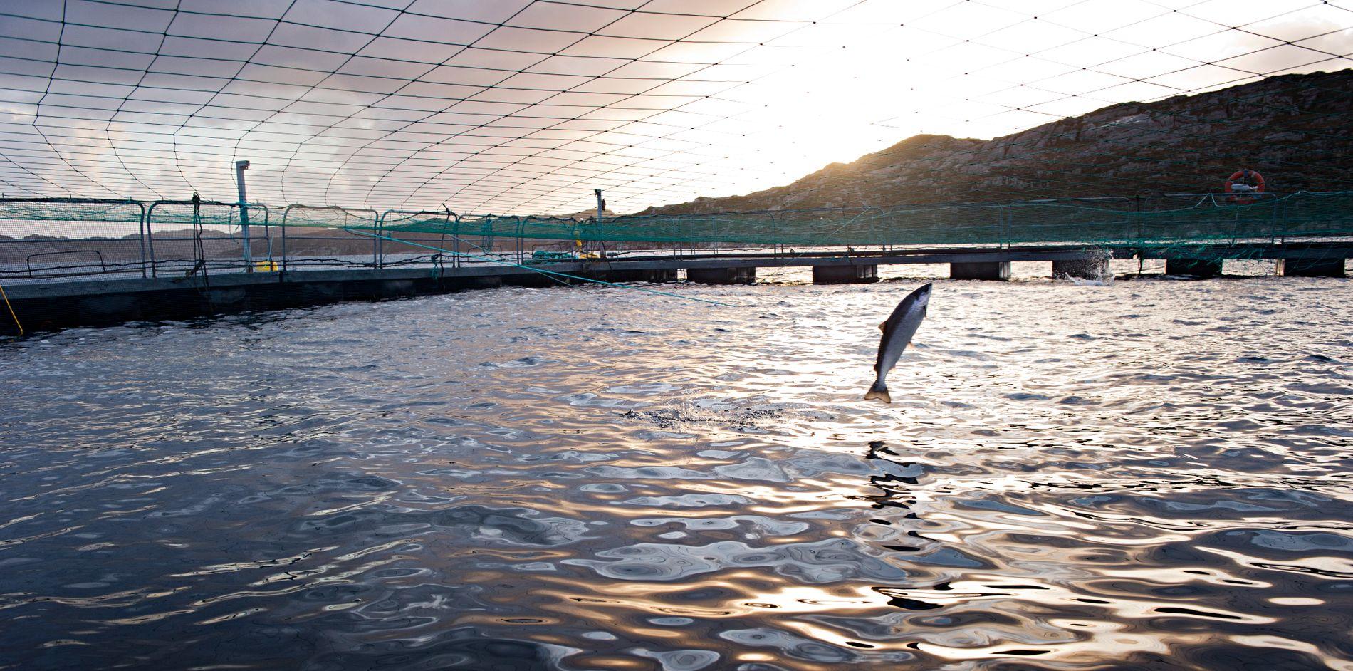 OPPDRETT SKAPER KONFLIKT: – Bransjen fremstår som arrogant og lite lydhør overfor bekymringene fra forskere og tradisjonelle fiskere, mener Anne Rokkan.