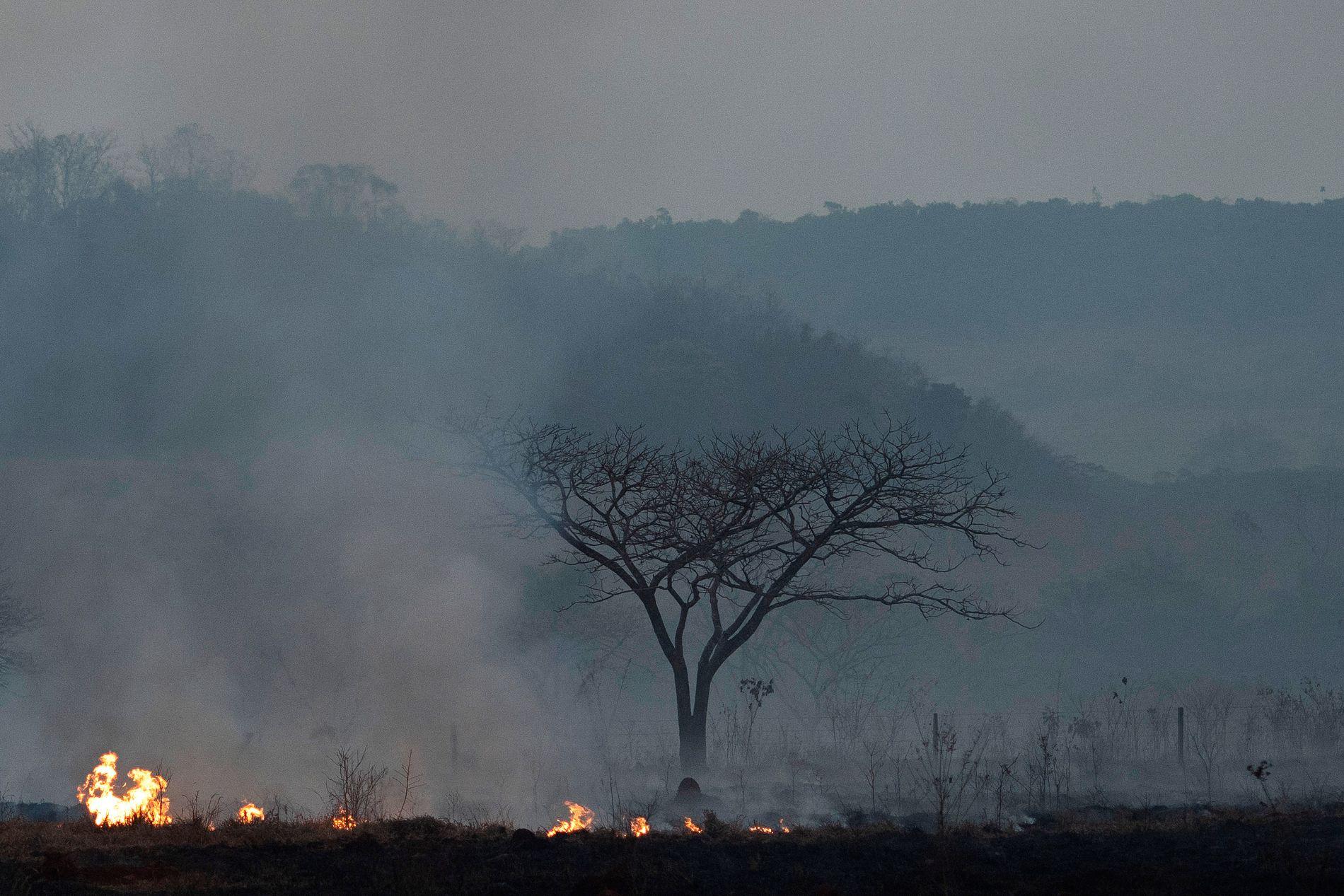 ØDELEGGENDE: Antallet branner i Amazonas økte med 278 prosent i juli i år, sammenligned med samme måned i fjor.