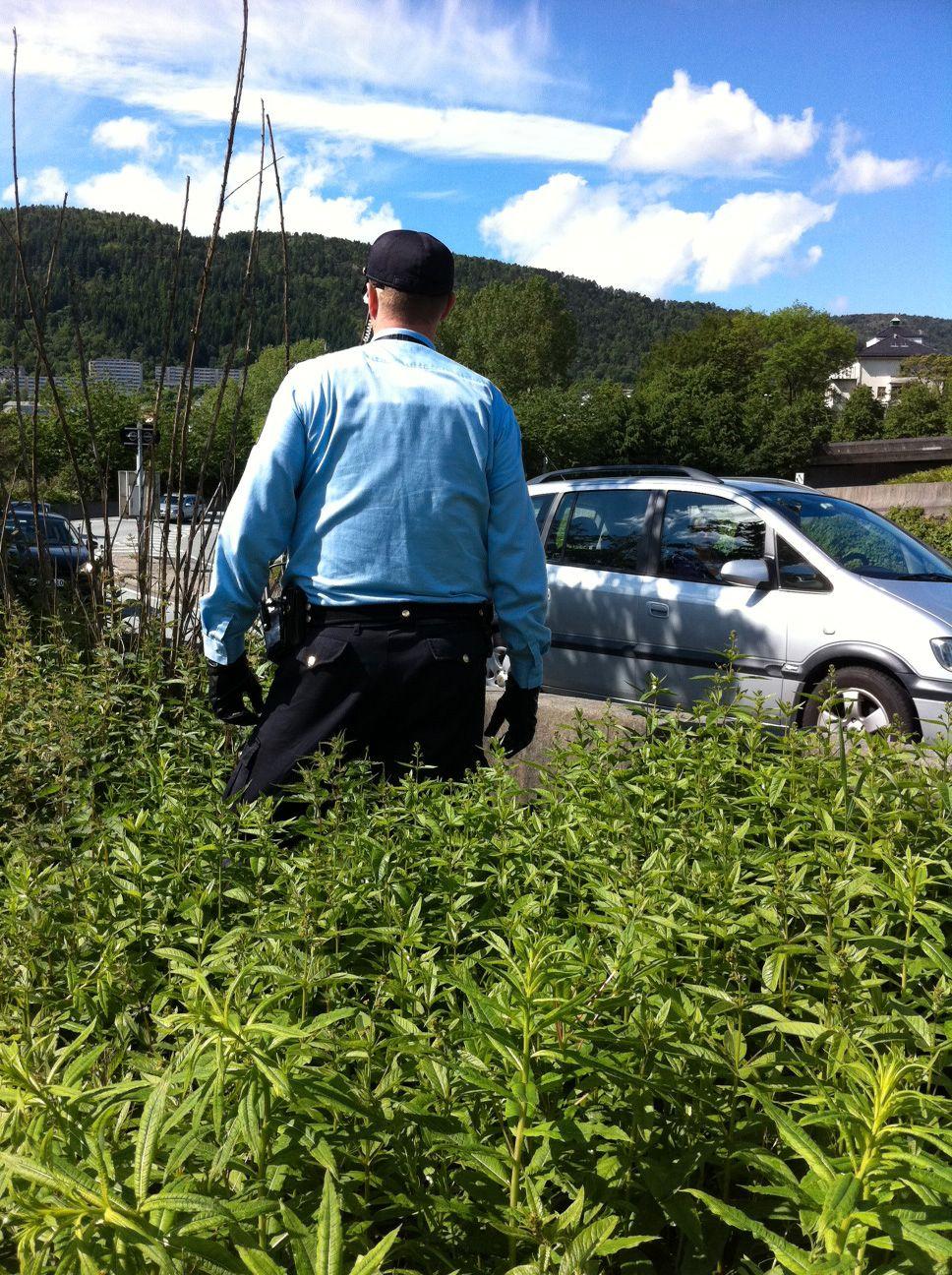 SØK: Politiet søkte etter taggerne i buskene.