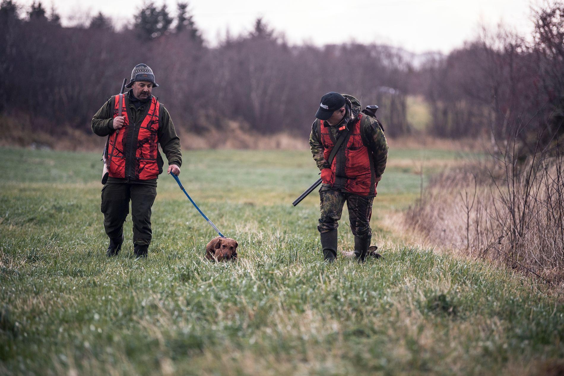 FELT: Et rådyr er felt for dachsen med navn Arnøyas Arthur. Eier Magnar Edvardsen Arnøy (tv) og Bertil Nyheim tar seg av transporten ut av skogen.
