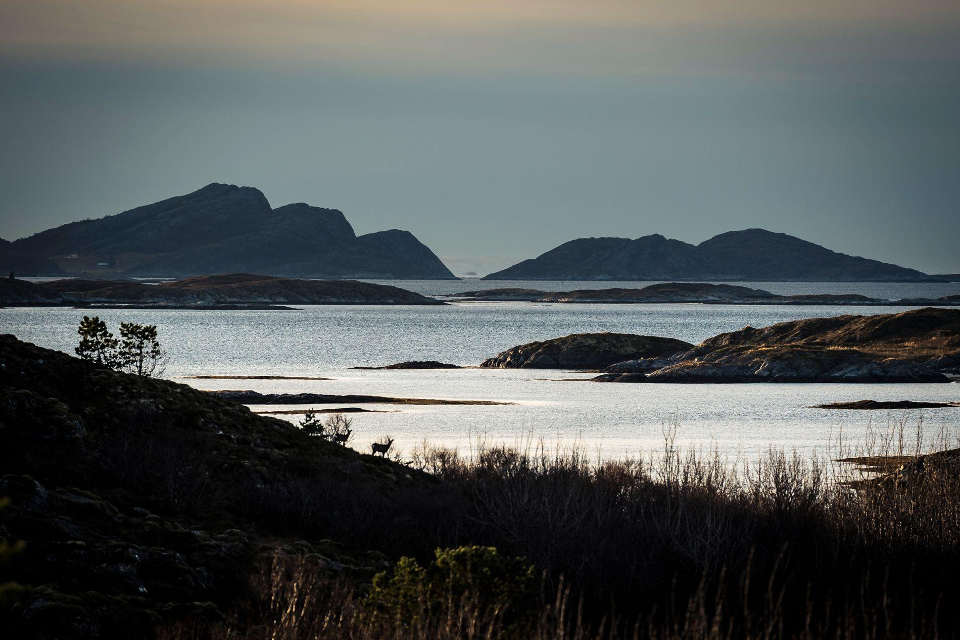 UTSIKT: To rådyr nyter utsikten mot Norskehavet ved Nyheim i Nærøy. Det perfekte stedet for en rådyrbestand å bli stor på.