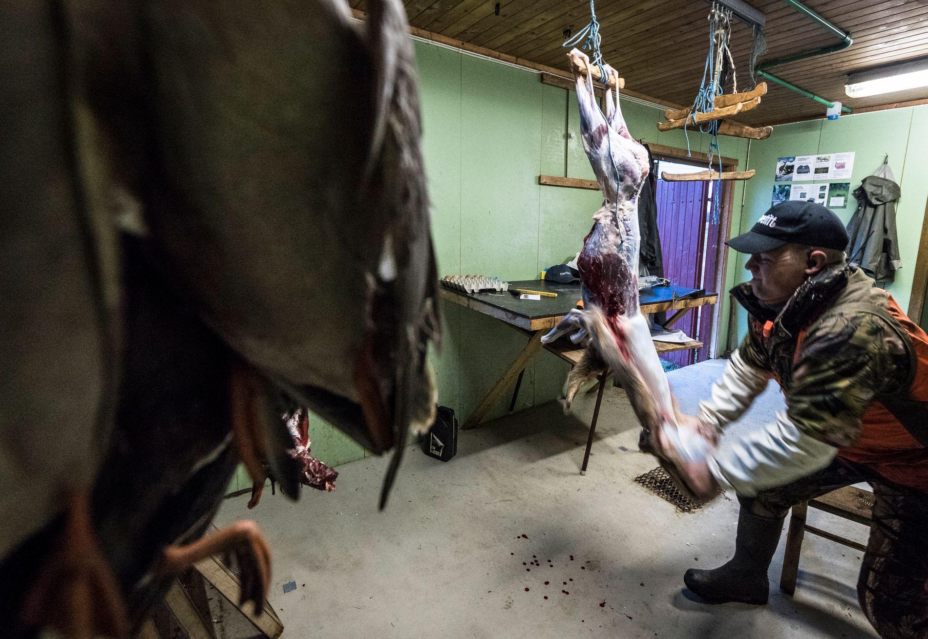 SLAKTERIET: På slakteriet til Bertil Nyheim blir kjøttet foredlet så fort jakten er over. Jakt-kunder kan kjøpe med seg kjøtt hjem om de vil.