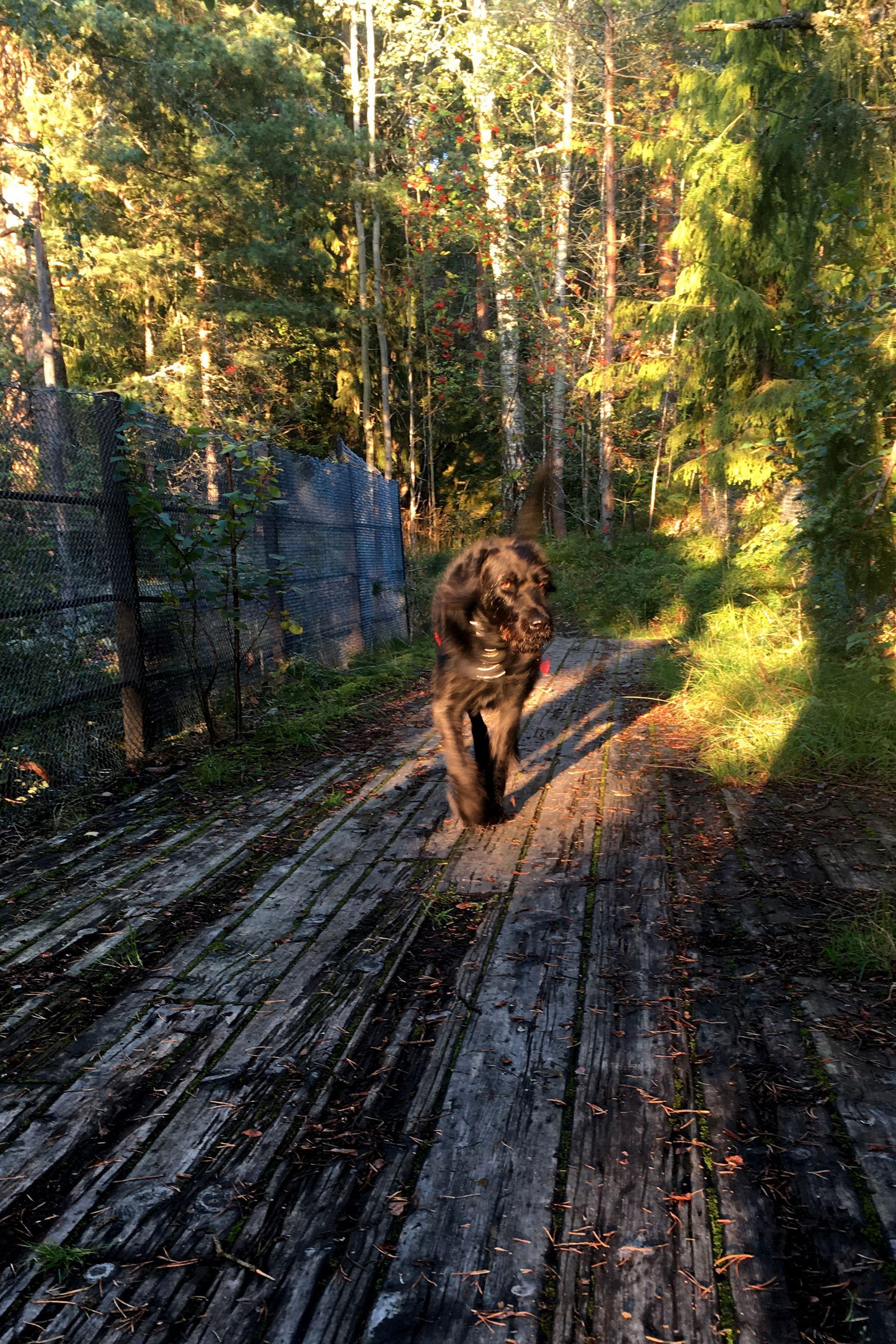 Mange hundeeiere er bekymret over sykdommen som nå har rammet mange hunder rundt om i landet. Illustrasjonsfoto: Cornelius Poppe / NTB scanpix