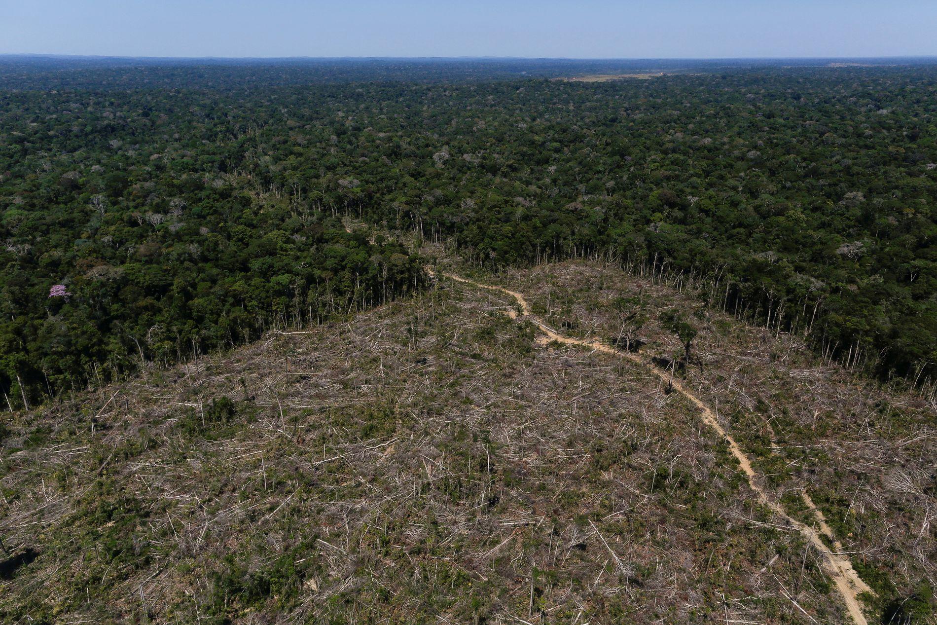 ALVORLIG TRUET: Et byområde på størrelse med en fotballbane forsvinner fra Amazonas hvert eneste minutt.