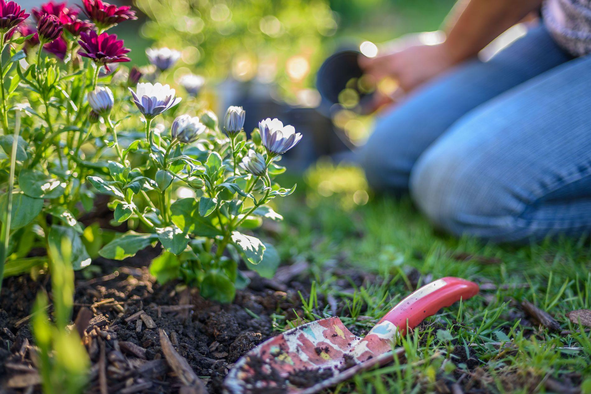 Hagen kan by på flere utfordringer. Rådene i denne saken kan kanskje hjelpe deg med å løse noen av dem.