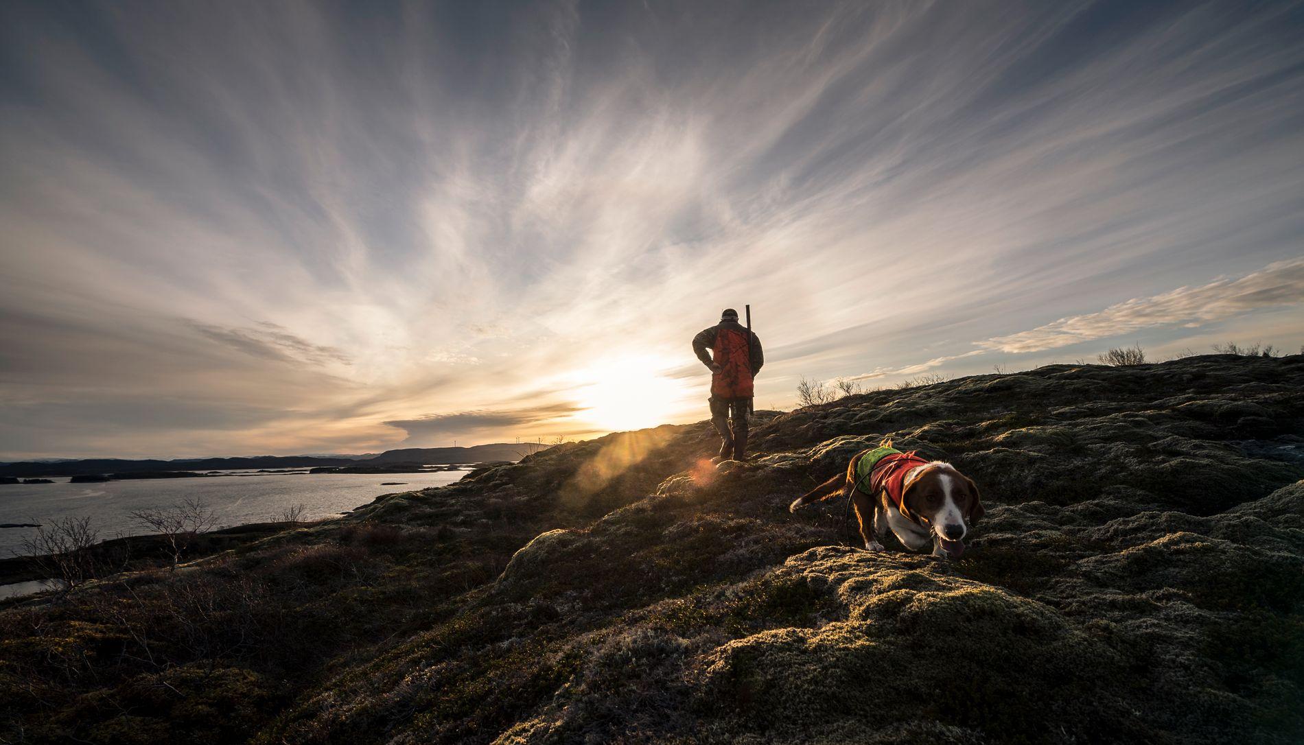 KUPERT: Det kuperte kystlandskapet med lyngheier er perfekt tilhold for rådyrene i Nærøy.