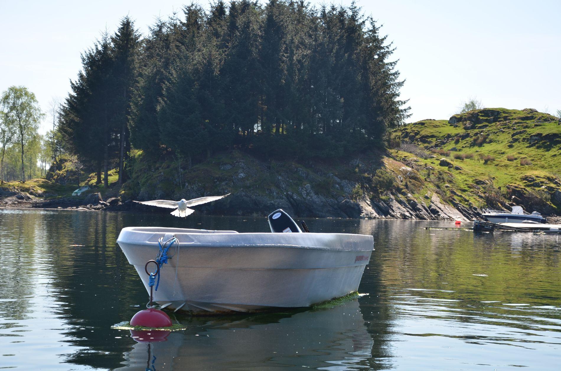 PASSER PÅ: Fiskemåsene har funnet en trygg plass til reiret sitt. Det er vanskelig for andre dyr å komme til. I tillegg må båteieren kunne betegnes som måsevennlig.