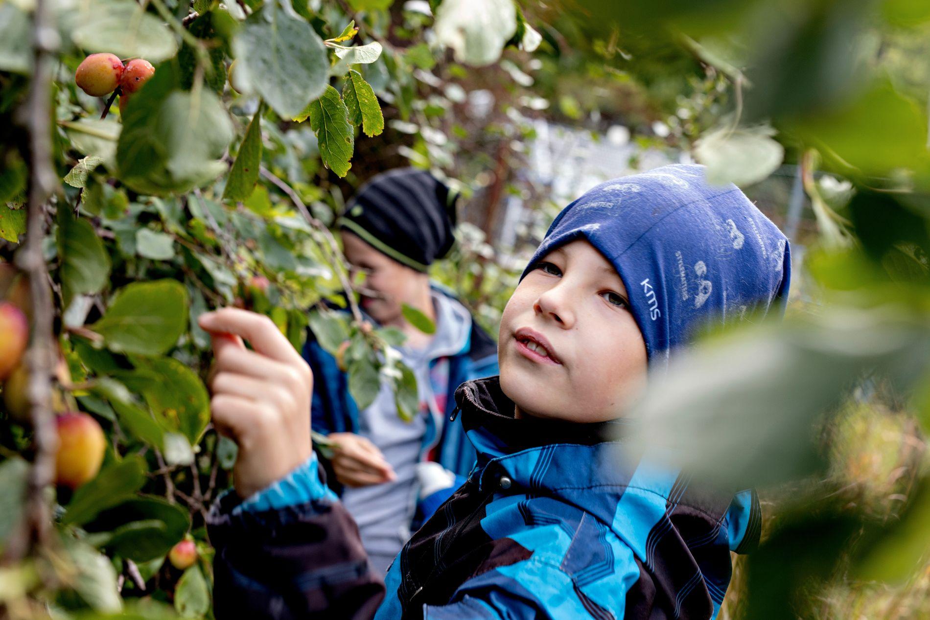 LÆRERIKT: Skulehagen kan nyttast til å læra meir om naturen sine mange under. Jonas (9) følgjer ivrig med på plantene sin utvikling i hagen.
