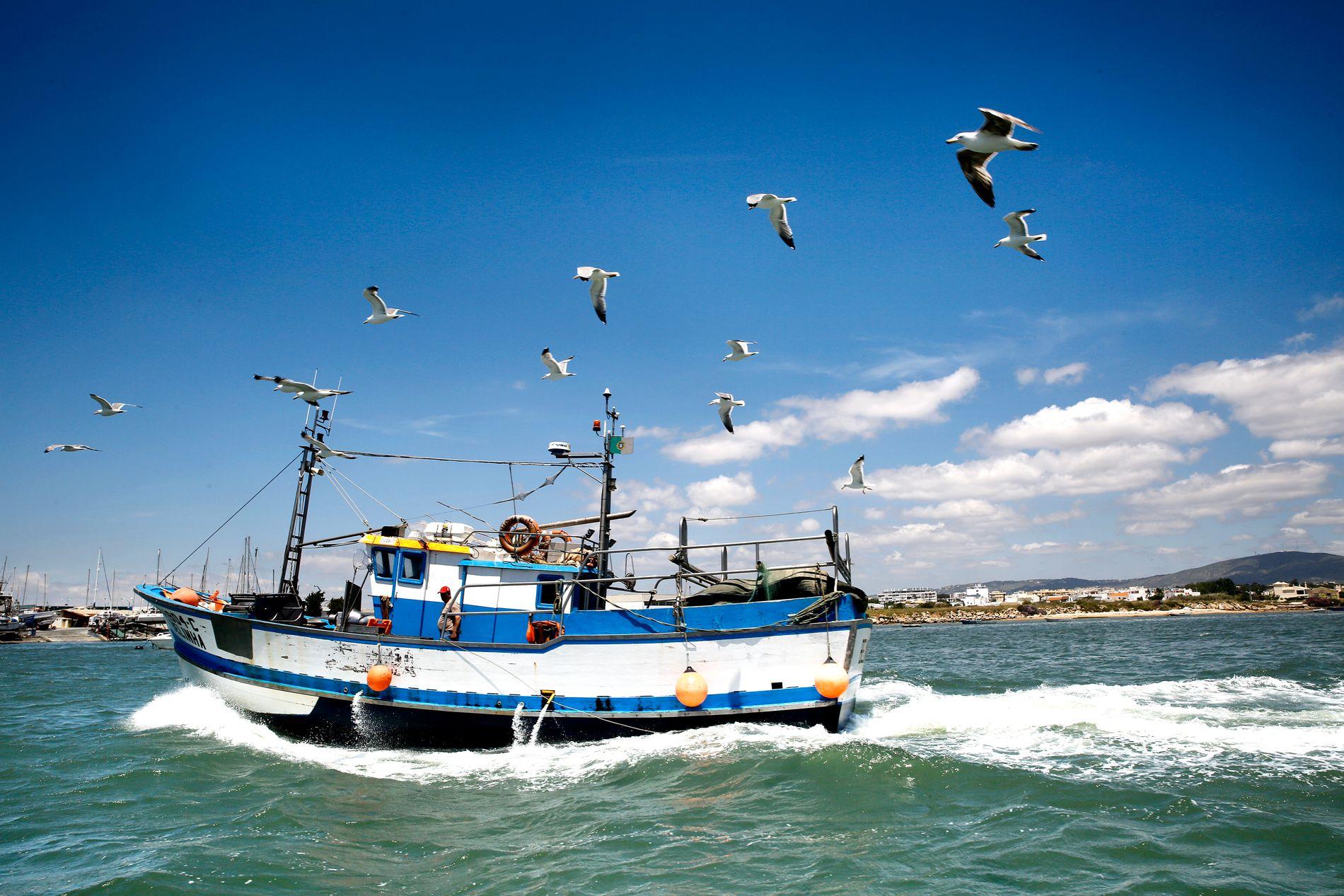 TA EN BÅTTUR: Det går massevis av sightseeingbåter ut fra Olhão. Ta inn fugl- og dyrelivet i naturparken og nyt livet på en av de mange øyene.