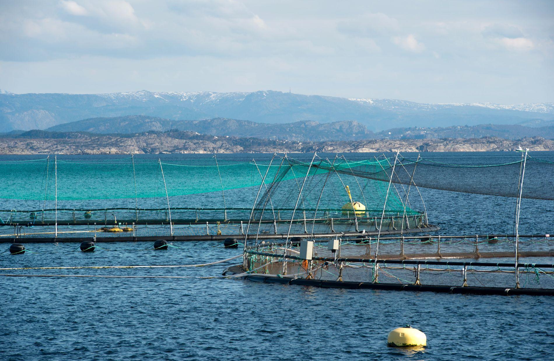 Flere nordmenn har troen på fiskenæringa enn oljenæringa, ifølge en undersøkelse fra Universitetet i Bergen. Her er Lerøy Vests matfiskanlegg ved Rongøy i Øygarden. Foto: Marit Hommedal / NTB scanpix