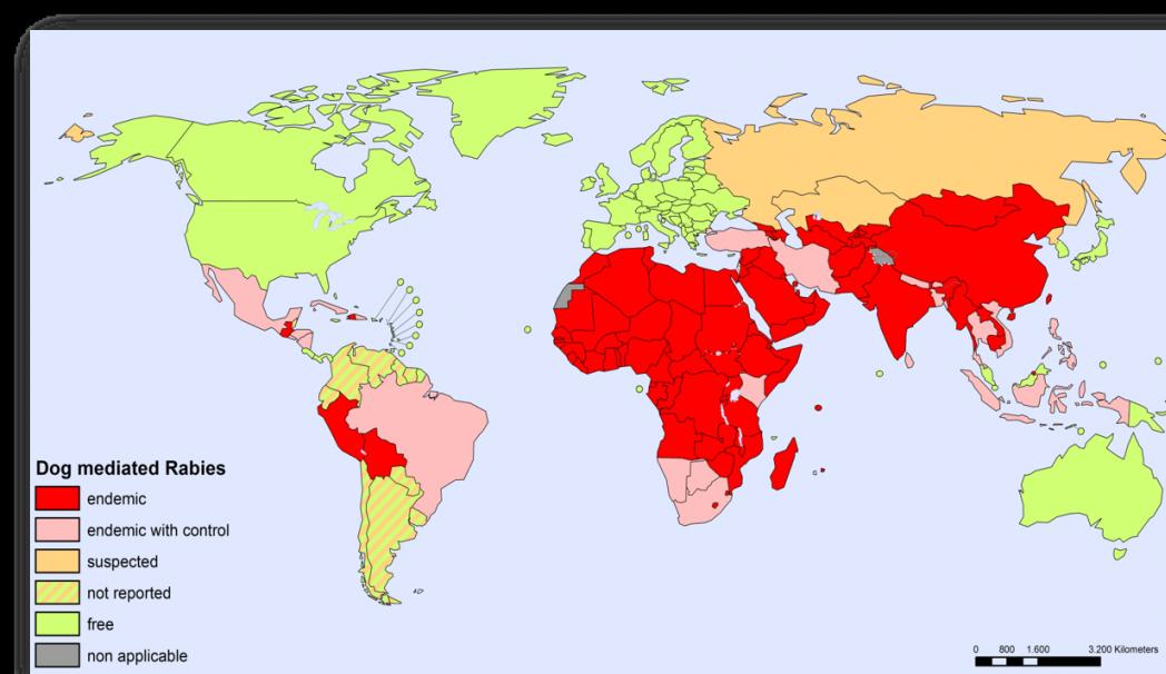 RABIES: Kartet viser hvor det er rapportert rabiessmitte fra hund. Grønne land er rabiesfri, mens røde land har høy forekomst.