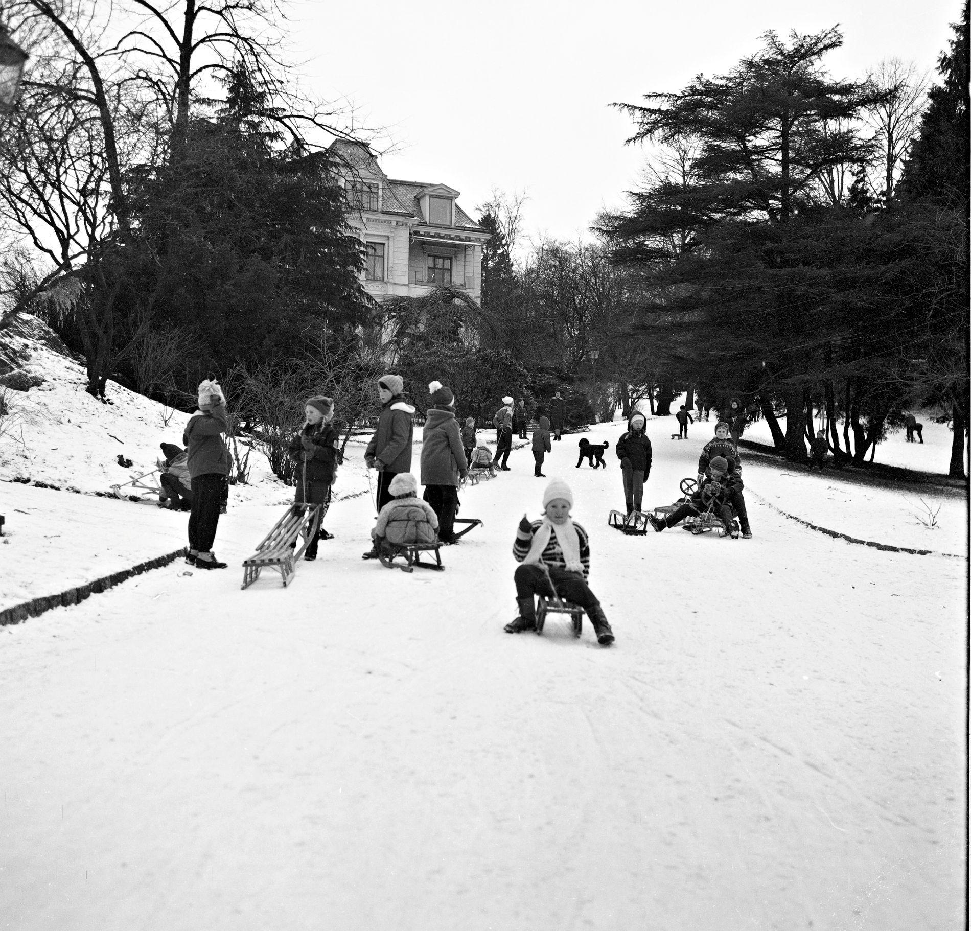 SNØ TIL JUL: Et plutselig snøfall førte til hektisk aking i Nygårdsparken i desember 1964.