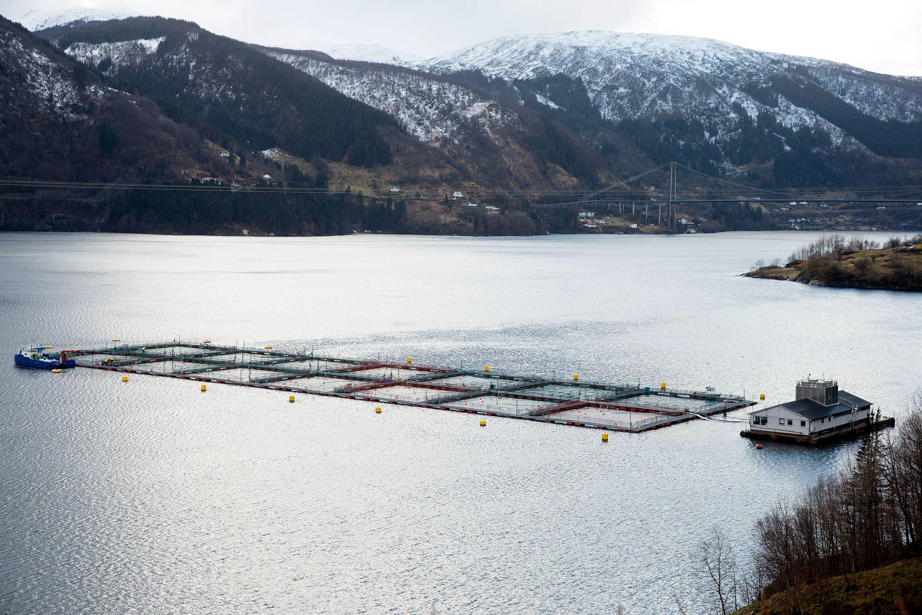 OMSTRIDT: Oppdrett, vindmøller, olje, gass, gruvedrift -  alt som kan gi oss inntekter, blir kritisert, ifølge Tom-Christer Nilsen. På bildet ser vi et oppdrettsanlegg i Osterfjorden.